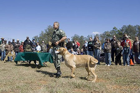 hunting dog demonstration